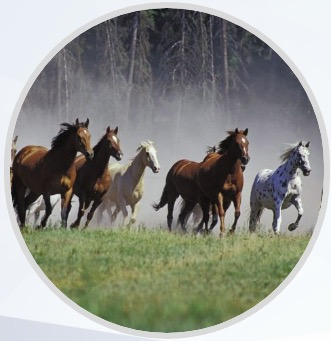 horses running in a remuda